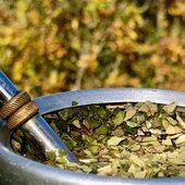 Herbst 🍂 Spaziergang mit 🧉 Triunfo Green (large cut, wenn jemand fragt). #yerbamate #mateorganica